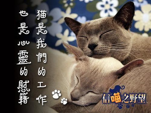 《信喵之野望》全网征集流浪猫救助合作伙伴